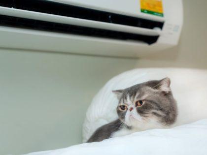 ¿Tienes mascotas? 4 razones por las que ellos necesitan aire acondicionado