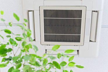 mantener la calidad del aire interior de forma natural